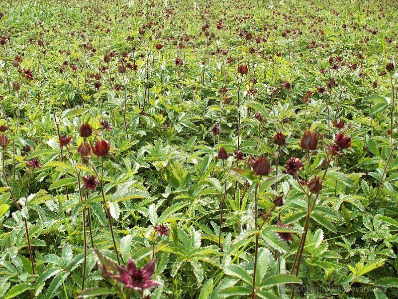Травы для увеличения бюста