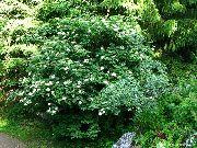 Бузина черная применение Лекарственные травы 27 сен 2011 .
